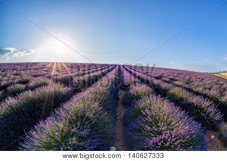 Lavender Field Against Colorful Sunset In Provence, France