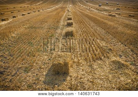 Hay bail harvesting in golden field landscape