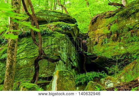 Moss-covered ledges in an Ohio park with fresh leaves of early spring make a study in green
