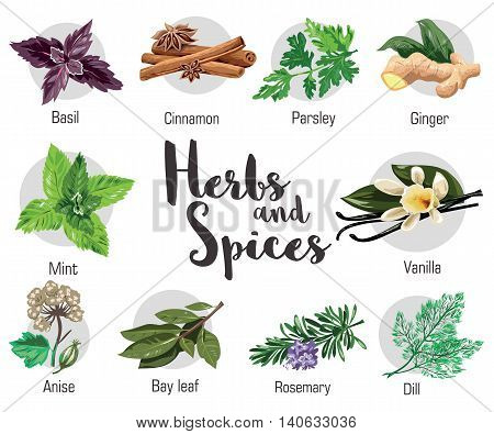 Herbs, condiment and spices with parsley, mint and rosemary, red basil, dill, anise, cinnamon and ginger, bay leaf and vanilla