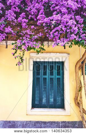 Old traditional greek house and window with flowers of bougainvillea Corfu Greece