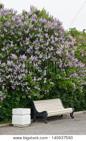 bench near the lilac bush in the park