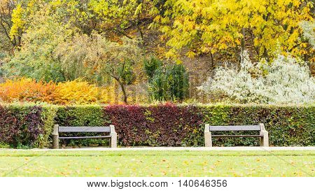 Hedge behind two benches. Autumnal park vegetation scenery. Outdoor nature relax leisure concept.