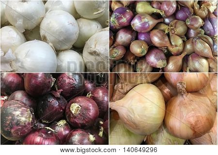 collage different types of onion and shallot background