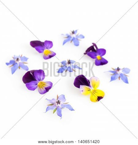 High key filtered image of borage and viola edible flowers. Shallow depth of field.
