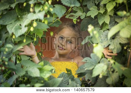 Little girl looking through the greenery of leaves.