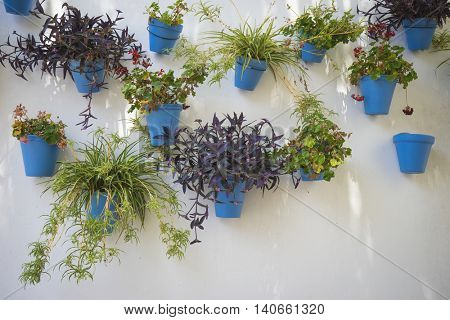 white wall with blue flower pots in Marbella, Andalucia Spain