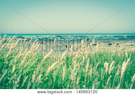 Retro effect image coastal new Zealand blue sky and sea to horizon beyond defocussed green garssy foreground and rocky foreshore between