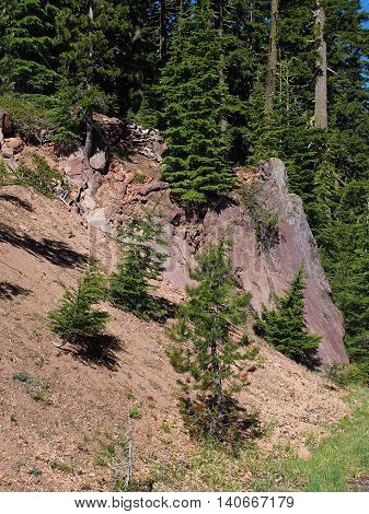 Trees somehow have found a foothold in solid rock on a hillside in Crater Lake National Park.