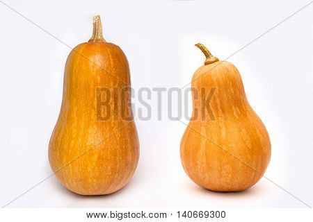 Two pumpkins fresh vegetables for hallowing holiday
