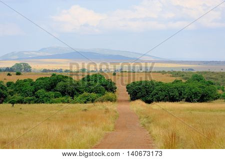Savannah landscape in the National park of Kenya Africa