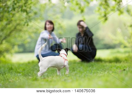Portrait Of Happy Mather With Son And Dog Jack Russell In Summer Park