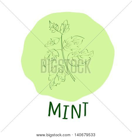 Hand drawn green mint branch with leaves isolated on a soft green background. Hand drawn spicy herbs. Doodle cooking ingredient for design. Hand drawn seasoning. Vector illustration