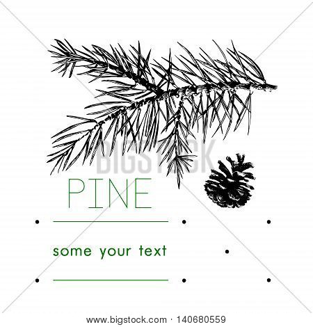 Pinecone Vector illustration pine tree hand drawn