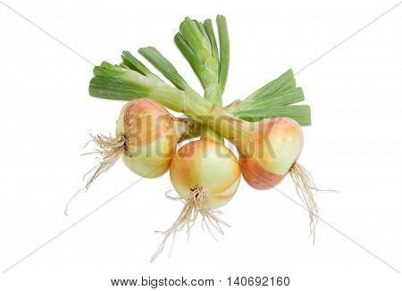 Three unpeeled young bulbs onion with a part of the stems on a light background