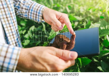 Farmer using digital tablet computer in cultivated soybean crops field modern technology application in agricultural growing activity selective focus
