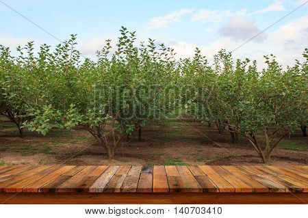 Empty old wooden table with mulberry fruit trees background. For display or montage your products.