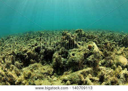 Dead coral reef killed by global warming, climate change, pollution