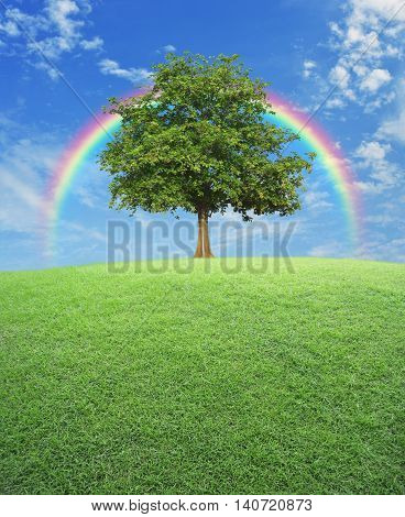 Big tree with green grass field over rainbow and blue sky nature background