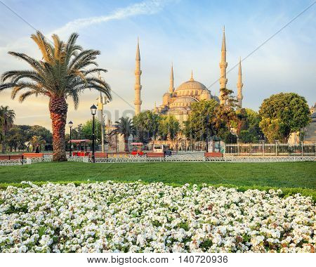 Sultan Ahmed Blue mosque on sunrise with flowers on foreground