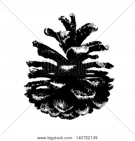 Pinecone Vector illustration. hand drawn old style