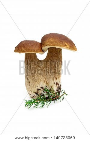 forest mushroom and fir branch isolated on white background. vertical photo.