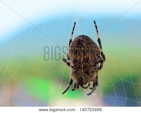 Big spider on a web on a colored background
