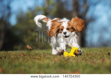 happy dog playing with a toy outdoors