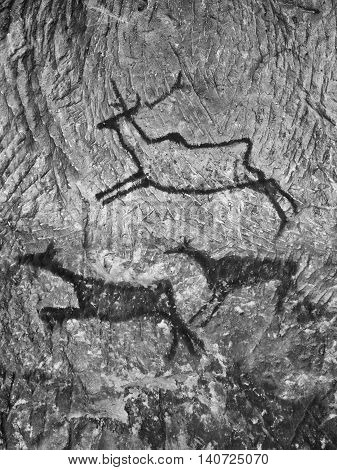 Black Carbon Paint Of Deer On Sandstone Wall, Prehistoric Picture