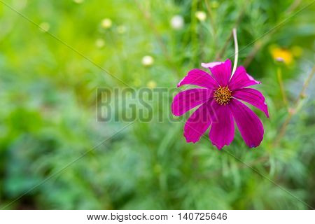 one isolated decorative claret flower is located a closeup on an indistinct background