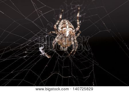 Crouching Spider Sitting On A Spider Web