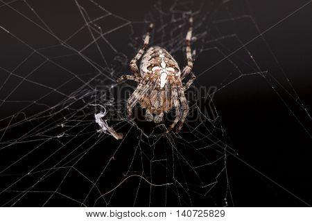 Crouching Spider Sitting On A Spider Web