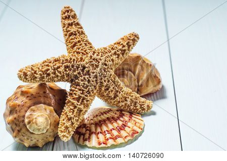 Concept of the summer time with fish star and sea shells on the wooden blue background. Summer time sea vacation.