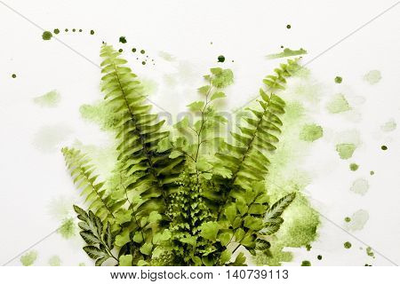 Fern leaf in green paint on white paper