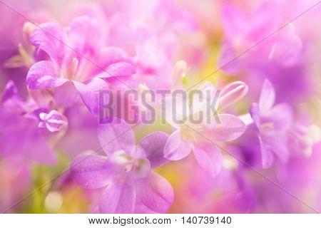 Lilac flowers,Closeup.