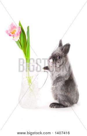 Bunny Standing Near The Vase With Tulip