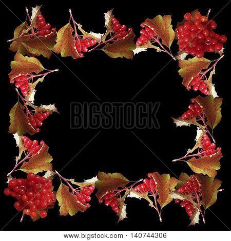 Beautiful autumn background isolated red berries viburnum