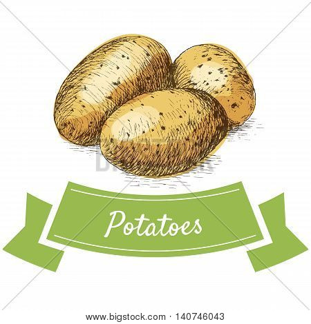 Vector illustration colorful set with potatoes. Illustration sorts of vegetables on white background