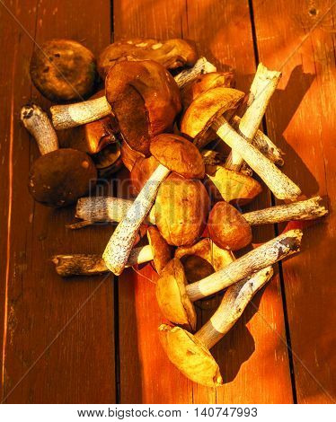 Fresh nice mushrooms collected in forest at day on brown wooden desk