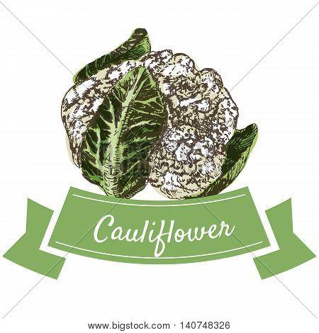 Vector illustration colorful set with cauliflower. Illustration sorts of vegetables on white background