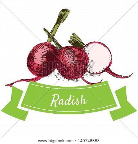 Vector illustration colorful set with radish. Illustration sorts of vegetables on white background