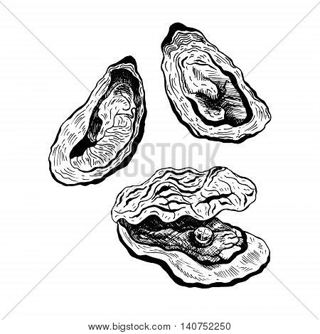Oysters vintage vector set, oyster with pearl. Black and white graphic design. Sea food. Vector illustration.