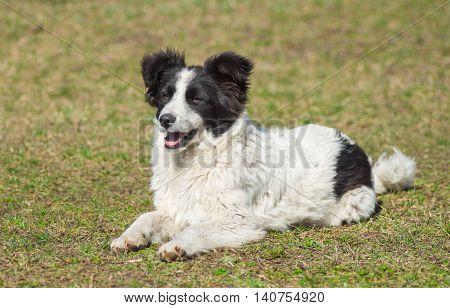 Stray dog sitting under the first spring sun