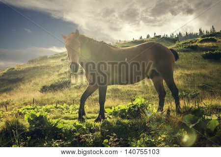 Muscular horse grazes on background of mountain scenery.