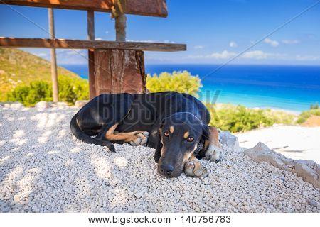 Dog lying down in the shadow on Zakynthos island, Greece