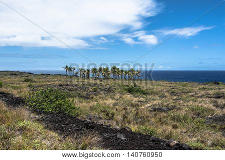 Palm trees on the lava flow in Volcanoes National Park, Hawaii