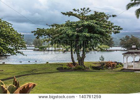 Hilo Garden along the Bay, Big Island, Hawaii
