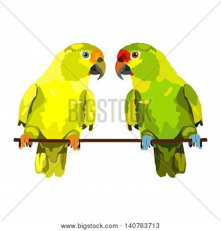 Vector illustration of two parrots on white background. Vector budgie
