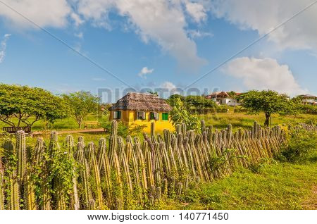 Yellow house and the fence of cactus on the island of Bonaire in the Caribbean - Netherlands Antilles