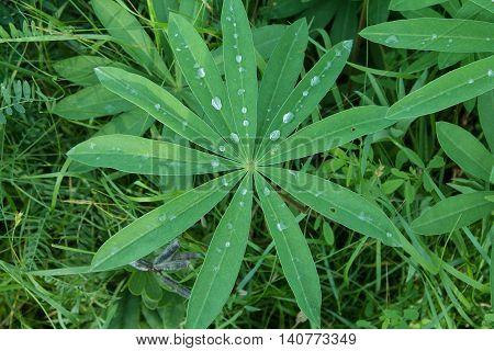 grass, drop, dew, sunlight, meadow, condensation, clear, green,